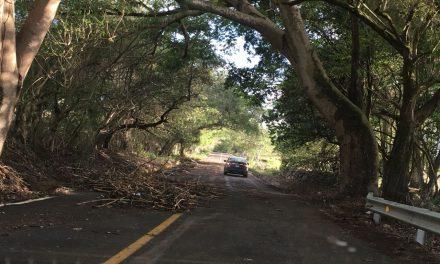 Cerrarán este jueves la carretera Chivato-Joyitas para derribar una parota