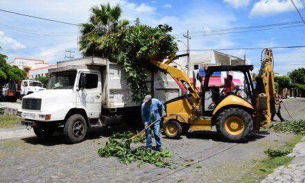 Se han retirado de las colonias capitalinas más de 1 mil 100 toneladas de ramas