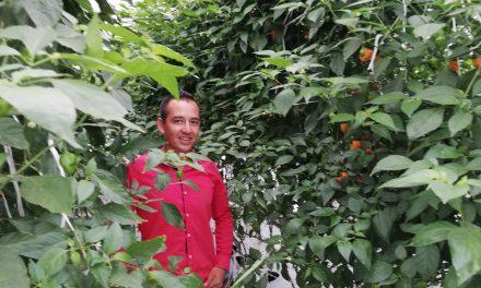 Desarrollan método para aumentar  productividad de chile habanero