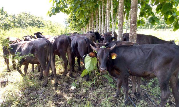 Se vinculan investigadores  de la U de C con ganaderos