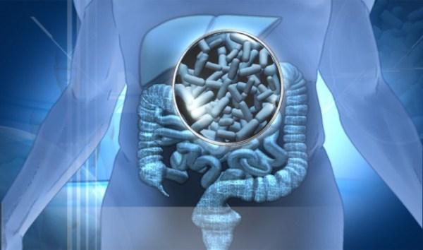 Probióticos, prebióticos y simbióticos, a raya el cáncer de colon