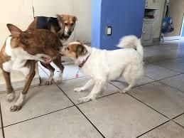 Felipe Cruz y Médicos Veterinarios Acuerdan Trabajar en Esterilización y Medicina Preventiva Canina y Felina