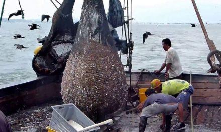 Inicia la veda para la captura del camarón en el Pacífico