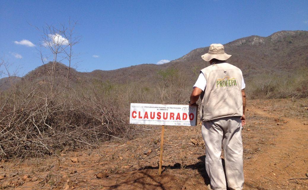 Profepa clausura obras y actividades de cambio de uso de suelo en un predio forestal en Minatitlán