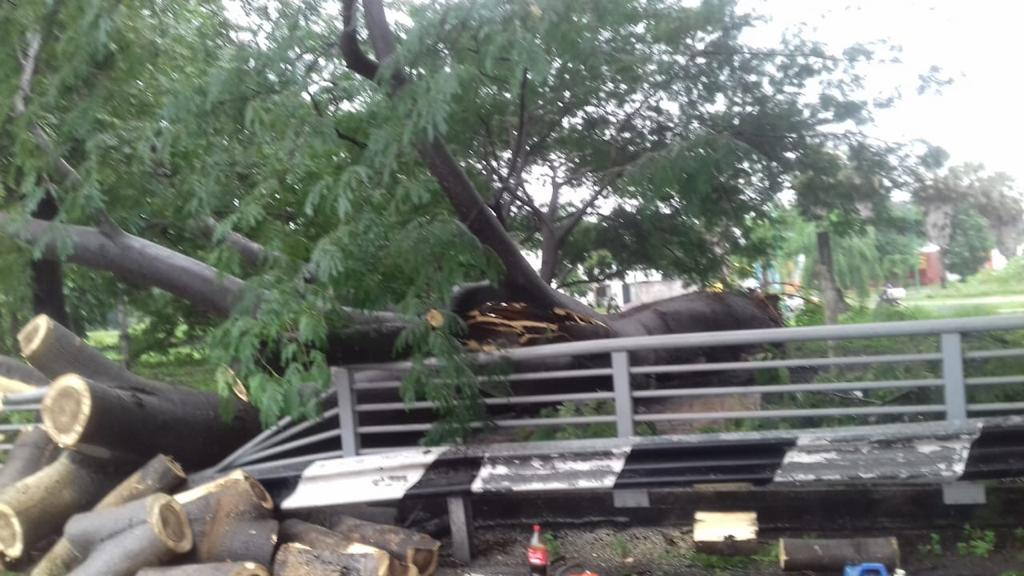 Sin afectaciones en el Estado por Priscilla; No se tiene reporte de personas lesionadas