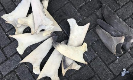 Vinculan a proceso a una persona por la extracción ilegal de aletas de tiburón en grado de tentativa con fines comerciales, en Colima