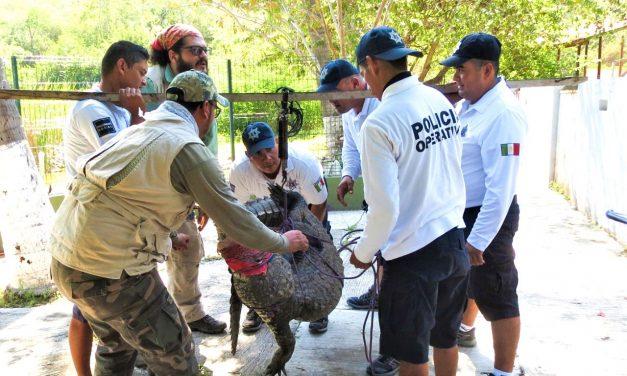 Imparten taller sobre manejo de cocodrilos