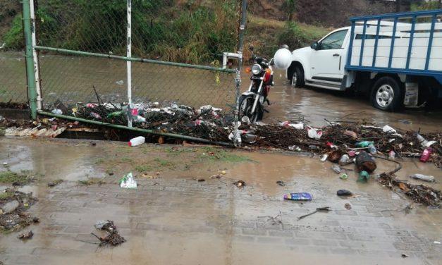Un árbol caído y encharcamientos, saldo de la lluvia en Manzanillo: PC